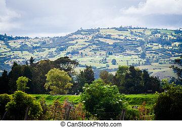 hermoso, paisaje,  Tr, naturaleza, parque, verde, primavera, pasto o césped
