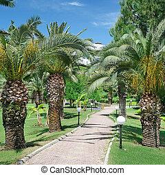 hermoso, palma, callejón, en el parque