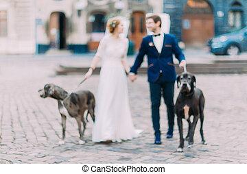hermoso, par wedding, ambulante, el, perros, en, el, lviv, centro de la ciudad