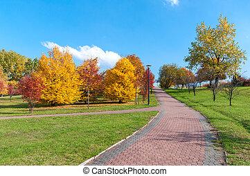 hermoso, parque, callejón, en, otoño