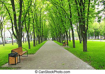 hermoso, parque, con, árboles verdes