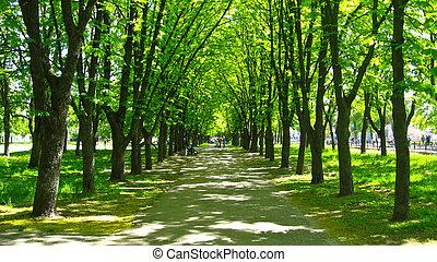hermoso, parque, con, muchos, árboles verdes