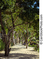 hermoso, parque de la ciudad, con, trayectoria, y, árboles verdes