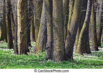 hermoso, parque verde, en, el, primavera