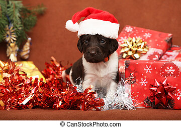 hermoso, perrito, navidad