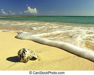 hermoso, playa