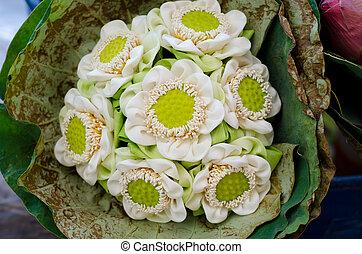 hermoso, plegadizo, loto, envuelto, en, loto, leaf.