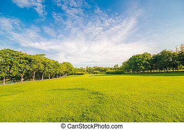 hermoso, pradera, y, árbol, en el parque