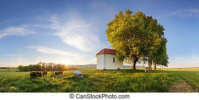 hermoso, primavera, agrícola, campo de trigo