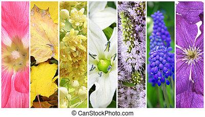 hermoso, primavera, collage