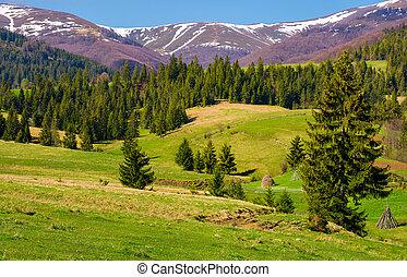 hermoso, primavera, paisaje, de, carpathians