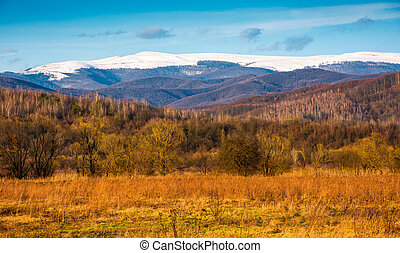 hermoso, primavera, paisaje, en, montañas
