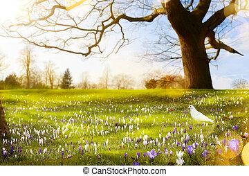 hermoso, primavera, resumen, soleado, plano de fondo