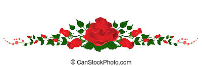 hermoso, ramo, rosas