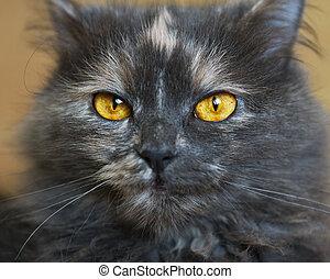 hermoso, retrato, de, un, gato gris