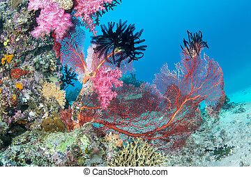 hermoso, rosa, arrecife, tropical