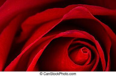 hermoso, rosa, arriba, rojo, cierre