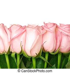 hermoso, rosas, frontera