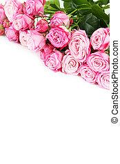 hermoso, rosas rosa, blanco, plano de fondo