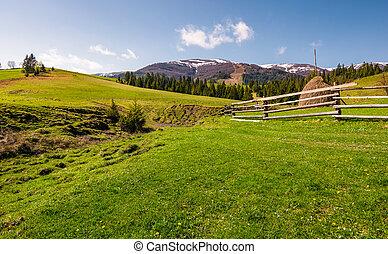 hermoso, rural, paisaje, en, primavera