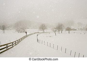 hermoso, sheep, corea, invierno, rancho, daegwallyeong, sur, paisaje
