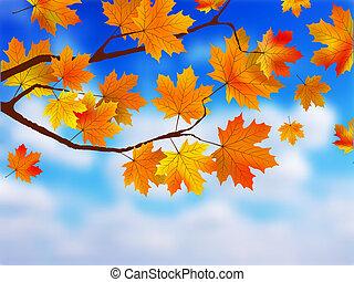 hermoso, sky., contra, indicio, otoño, plano de fondo