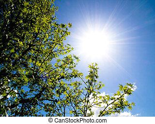 hermoso, sol, árbol, primavera