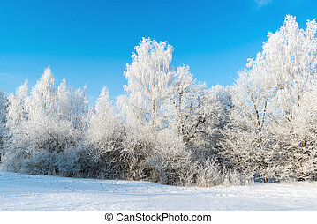 hermoso, soleado, invierno, día, bosque