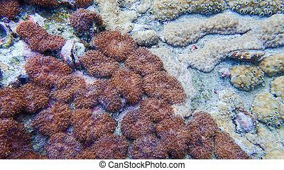 hermoso, submarino, barrera coralina