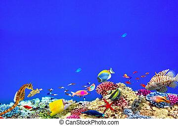 hermoso, submarino, fish., tropical, maravilloso, corales, ...