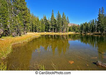 hermoso, superficial, lago, fur-trees