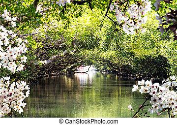 hermoso, taiwán, lugar, sakura