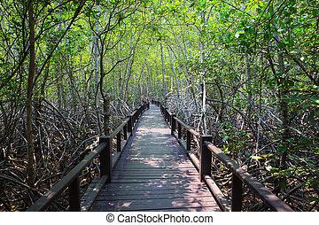 hermoso, tierra, scape, de, madera, manera, puente, en,...