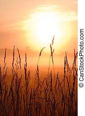 hermoso, trigo, salida del sol, mañana