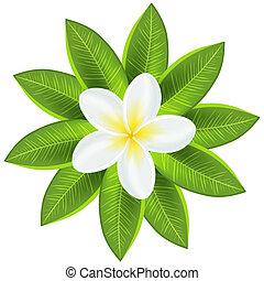hermoso, tropical, flor blanca