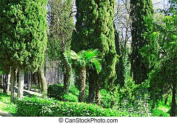 hermoso, tropical, parque