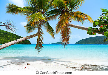 hermoso,  tropical, playa, Caribe