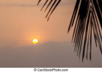 hermoso, tropical, salida del sol