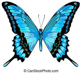 hermoso, vector, aislado, azul, mariposa