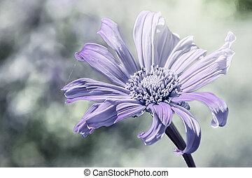 hermoso, vendimia, flor, foco suave
