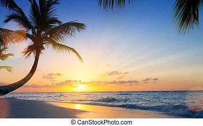 hermoso, verano, arte, encima, vacaciones, tropical, ocaso, drims;, playa
