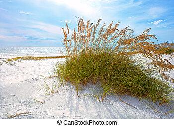 hermoso, verano, avenas, dunas, florida, tarde atrasada,...