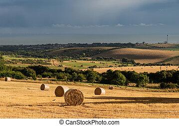 hermoso, verano, nubes, tempestuoso, heno, campo, campo,...