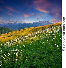 hermoso, verano, ocaso, en las montañas, con, un, pluma, grass.