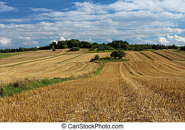hermoso, verano, paisaje rural