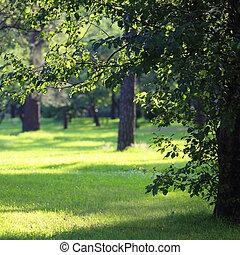 hermoso, verano, parque