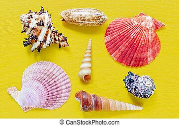 hermoso, verano, plano, conchas, lay., shells., textura, yellow., brillante, fondo.