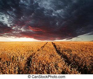 hermoso, verano, tempestuoso, imagen, cielo, ocaso,...
