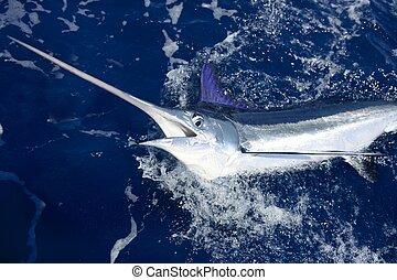 hermoso, verdadero, billfish, marlin, pesca, blanco, deporte