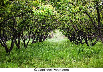 hermoso, verde, jardín, en, un, día de verano